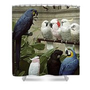 A Select Committee Shower Curtain