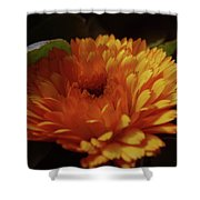 A Shadowed Blossom  Shower Curtain