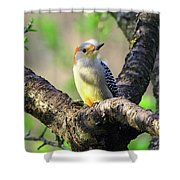 A Shady Woodland Bird Red-bellied Woodpecker Shower Curtain