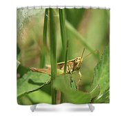 A Shy Grasshopper Shower Curtain