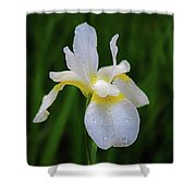 A Simple Purity Shower Curtain by Kendall McKernon