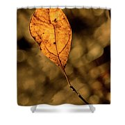 A Single Leaf In The Late Sun Shower Curtain