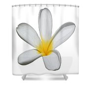 A Single Plumeria Flower Isolated Shower Curtain