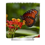 A Sip Of Milkweed Nectar Shower Curtain