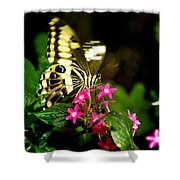 A Sip Of Nectar Shower Curtain