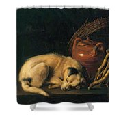 A Sleeping Dog With Terracotta Pot 1650 Shower Curtain