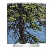 A Slice Of Pine Shower Curtain
