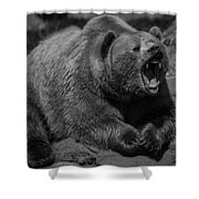 A Slightly Upset Grizzly Bear Shower Curtain
