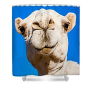 A Smiling Camel Shower Curtain