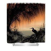 A Snowy Egret (egretta Thula) Settling Shower Curtain