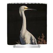 A Snowy Egret Portrait Shower Curtain