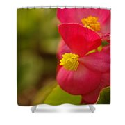 A Soft Red Flower Shower Curtain