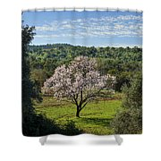 A Solitary Almond Tree Shower Curtain