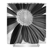A Solo Daisy In Negative Shower Curtain