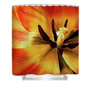 A Song From The Heart Shower Curtain