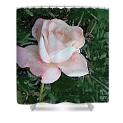 A Special Rose Shower Curtain