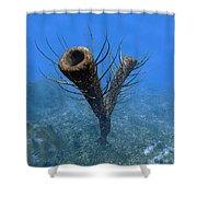 A Species Of Pirania, A Primitive Shower Curtain
