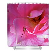 A Spider And A Rose Shower Curtain