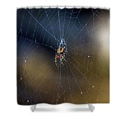 A Spider And Her Web Shower Curtain