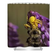 A Spider Eats A Bumblebee While Perched Shower Curtain