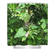A Spider Web Shower Curtain
