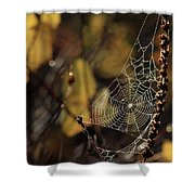 A Spiders Creation Shower Curtain