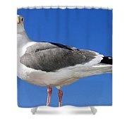 A Splendid Seagull Shower Curtain