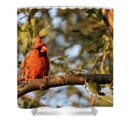 A Spot Of Red In The Trees Shower Curtain