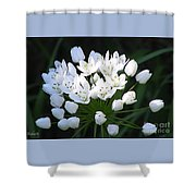 A Spray Of Wild Onions Shower Curtain