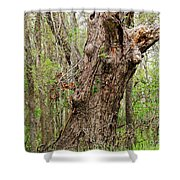 A Spring Beauty Shower Curtain