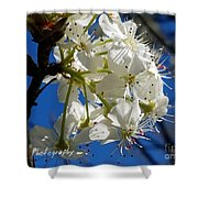 A Spring Delight Shower Curtain