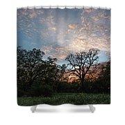 A Spring Evening Shower Curtain