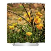 A Spring Morning  Shower Curtain