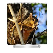 A Squirrel's Feist Shower Curtain