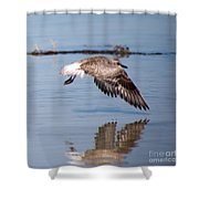 A Startled Sanderling By Darrell Hutto Shower Curtain
