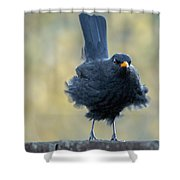 A Stiff Breeze Shower Curtain