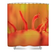 A Strange Life Shower Curtain