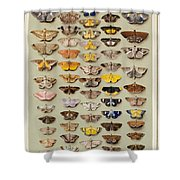 A Study Of Moths Characteristic Of Indo Shower Curtain