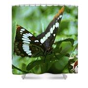 A Summer Butterfly  Shower Curtain