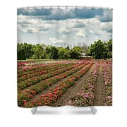 A Summer Dream Of Roses Shower Curtain