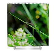 A Summer Of Dragonfly Kisses Shower Curtain