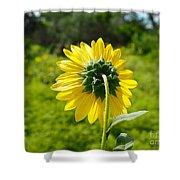 A Sunflower's Backside Shower Curtain