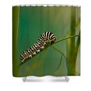 A Swallowtail Butterfly Caterpillar Shower Curtain