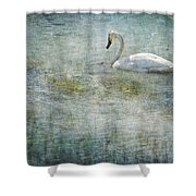 A Swan's Reverie Shower Curtain