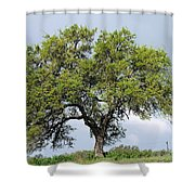 A Tale Of One Tree Shower Curtain