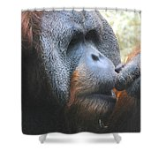 A Tang Profile Shower Curtain