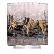 A Thirsty Horse 1 Shower Curtain