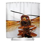 A Thug Bug Shower Curtain