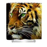 A Tiger's Stare Shower Curtain