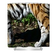A Tigers Stride Shower Curtain